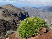 Madeiraö Royaltyfria Foton