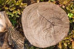 A madeira é cortada para o fundo Foto de Stock Royalty Free