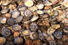 Madeira. Scene in portugal / island of madeira / funchal / mercado dos lavradores Stock Photos