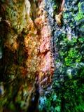 Madeira Fotografia de Stock Royalty Free