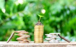 A madeira ajudou a moeda e pilha da moeda Imagens de Stock