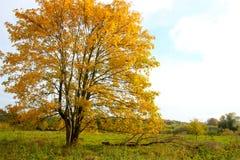 Madeira amarela em um prado mim fotografia de stock royalty free