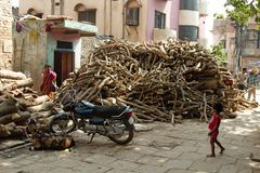 Madeira ardente assim chamada Esta madeira é apropriada para mortos ardentes fotos de stock
