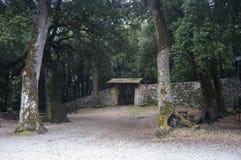 A madeira assustado de Monteluco Spoleto, italy Fotos de Stock