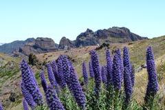 Madeira berg royaltyfri fotografi