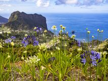 Madeira-Blumen lizenzfreies stockbild