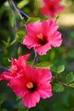 Madeira botanical garden Stock Images