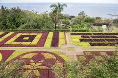 Madeira Botanical Garden, Funchal / MADEIRA - April 22, 2017: Amazing mosaic made of colorful plants is the biggest attraction. Of the entire botanical garden Royalty Free Stock Images