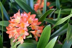 Madeira botanical garden. In Funchal, Madeira royalty free stock photos