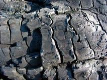 Madeira carbonizada Imagens de Stock Royalty Free