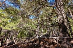 Madeira-cerca nas caminhadas fotos de stock royalty free
