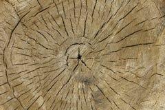 Madeira clara do corte de círculo com quebras Chonburi anual Tail?ndia de rings textura de superf?cie natural imagens de stock
