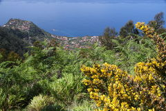 Madeira coast Stock Photography