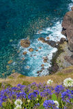 Madeira coast Royalty Free Stock Photo