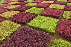 Madeira colorida arbustos Imagen de archivo