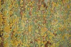 Madeira colorida velha Fotografia de Stock