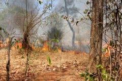 Madeira com fogo Fotografia de Stock Royalty Free