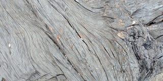 A madeira com textura, natureza ajardina, Índia de Lakhnadon, imagem tomada em fevereiro de 2018, fundo das paisagens Imagens de Stock