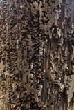 Madeira corrosiva encontrada em uma aldeia piscatória foto de stock