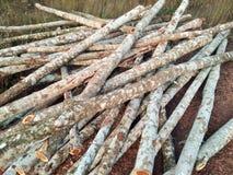 Madeira cortada/logs Imagens de Stock Royalty Free