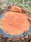 Madeira cortada/logs Imagem de Stock Royalty Free