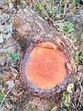 Madeira cortada/logs Fotografia de Stock Royalty Free