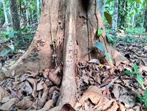 Madeira cortada/logs Foto de Stock Royalty Free