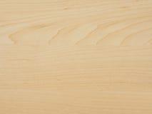 Madeira da árvore de bordo imagem de stock