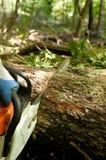 Madeira da estaca da serra de cadeia Fotografia de Stock Royalty Free