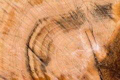 Madeira da fatia Imagens de Stock