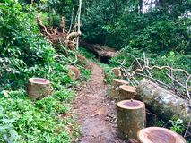Madeira da madeira na floresta imagem de stock royalty free