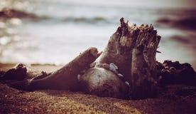 Madeira da praia fotos de stock