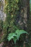 Madeira da teca no jardim foto de stock