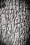Madeira da textura Imagem de Stock