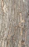 Madeira da textura Imagens de Stock Royalty Free