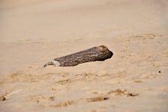 Madeira da tração na praia Fotos de Stock Royalty Free
