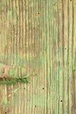 Madeira danificada pela larva de carcoma foto de stock