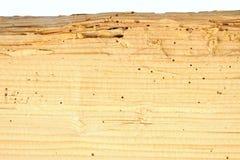 Madeira danificada pela larva de carcoma imagens de stock royalty free