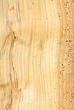 Madeira danificada pela larva de carcoma imagem de stock royalty free