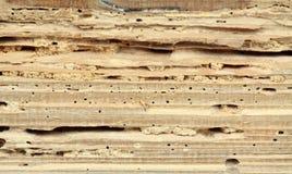 Madeira danificada pelo woodworm fotos de stock royalty free