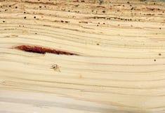 Madeira danificada pelo woodworm imagem de stock royalty free
