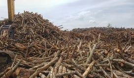 Madeira das árvores da borracha Fotos de Stock Royalty Free