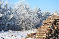 Madeira das árvores da neve da manhã do inverno o céu fotografia de stock
