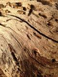 Madeira de Brown imagens de stock royalty free
