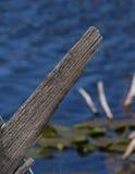 Madeira de deterioração foto de stock