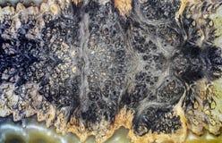 Madeira de estabilização de moldação do burl da resina de cola Epoxy ilustração royalty free