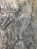 Madeira de madeira Imagem de Stock