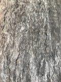 Madeira de madeira Fotografia de Stock Royalty Free