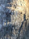 Madeira de madeira Fotografia de Stock