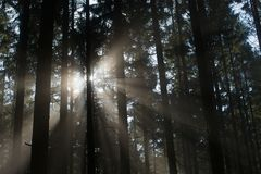 Madeira de pinho da luz dispersa Foto de Stock Royalty Free